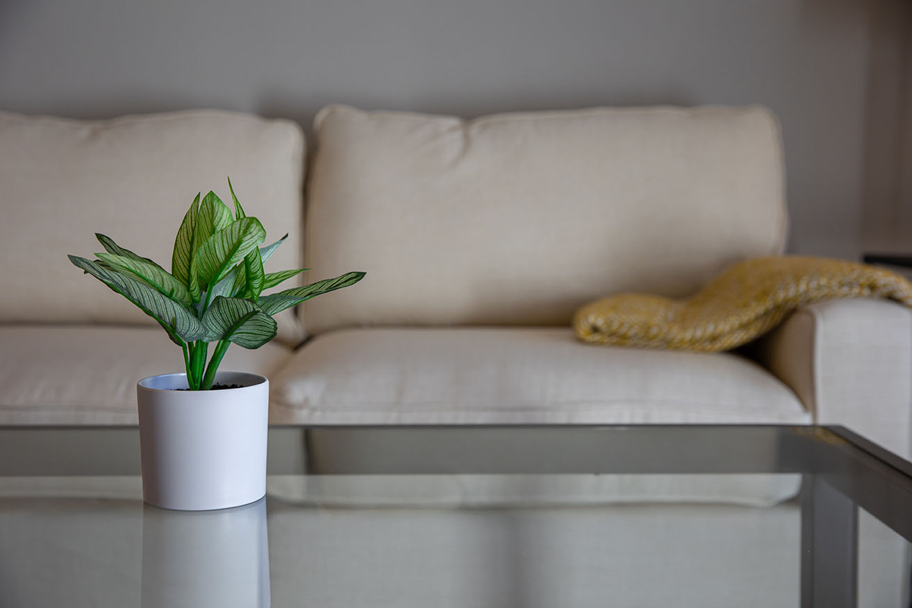 A small plant is set atop a glass table in front of modern furnishings inside a home living room.